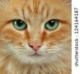 cat portrait | Shutterstock . vector #124164187