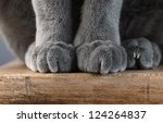 Detail shot of soft Cat paws while sitting on table - stock photo
