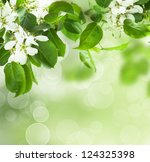 Spring blossom - floral border of green leaves and white flowers, abstract nature background - stock photo