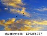 Flock Of Birds Flying In...