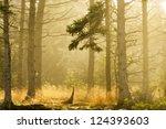 golden forest light in acadia... | Shutterstock . vector #124393603
