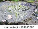 Oak Leaves Sculpted On The Rock