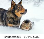 Stock photo big dog and cat sitting together in the snow 124435603