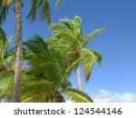 Green palm trees and a beautiful blue sky in the tropics - stock photo
