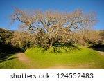 Oak Tree With A Walking Path...