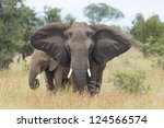 A female African Elephant (Loxodonta africana) with her calf, in South Africa's Kruger Park - stock photo