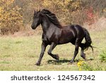 Friesian stallion running on meadow - stock photo