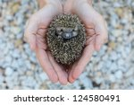 Environment protection: Little animal - hedgehog in human hand (shallow depth of field) - stock photo