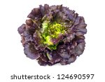 Oak Leaf Lettuce Isolated On...