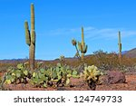 the diversity of the arizona... | Shutterstock . vector #124749733