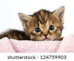 kitten lying with his head on a ... | Shutterstock . vector #124759903