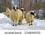 a flock of purebred domestic...   Shutterstock . vector #124844533