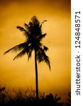 Coconut palm on sunset. - stock photo