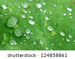 Dew Drops On Surface Of Green Leaf - stock photo