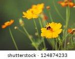 Bee On Oyellow Flower