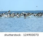 pelicans taking off in the... | Shutterstock . vector #124903073