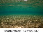 Clear Water And Sea Grass Meet...