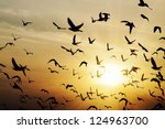 pigeon silhouette against a beautiful sunset - stock photo