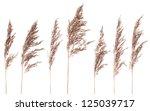 Seven Dried Bush Grass Panicle...