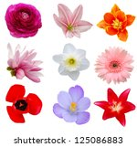Stock photo spring flowers 125086883