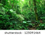 jungle - stock photo