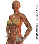 3D rendering of the anatomy and muscles of a woman - stock photo