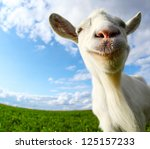 Funny Goat's Portrait On A...