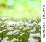 Chamomile meadow - stock photo