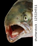 Natural head of salmon in all focus, isolated on black surface. - stock photo