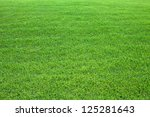 green lawn for background.... | Shutterstock . vector #125281643