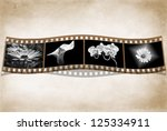 black and white flowers filmstrip on textured background - stock photo