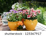 Spring Flowers In Pots Dianthu...
