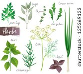 aromatic herbs set | Shutterstock .eps vector #125369123
