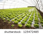 vegetables cultivation in a hothouse - stock photo