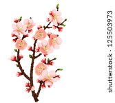 cherry blossom branch abstract... | Shutterstock .eps vector #125503973