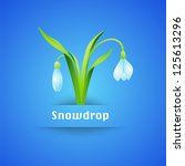 Snowdrop Flower on Blue background. Vector - stock vector