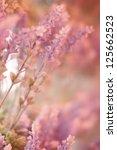 lavender | Shutterstock . vector #125662523