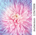 Flowers art closeup. Wedding holiday card - stock photo