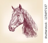 horse hand drawn vector llustration realistic sketch - stock vector