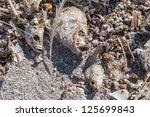 Dead Fish At The Salton Sea