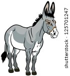 donkey,front view picture isolated on white background,vector illustration