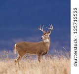White Tailed Buck Deer Stag In...