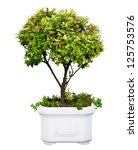 Bonsai dwarf green tree in pot isolated on white background - stock photo