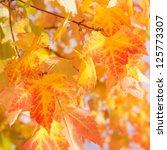 leaves in sunlight | Shutterstock . vector #125773307