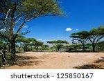 ������, ������: Savanna landscape acacia trees