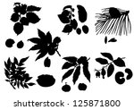 Collection of silhouettes of nuts - stock vector