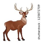 Elegant deer. Vector isolated animal. - stock vector