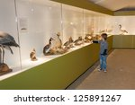 little child in museum pointing ... | Shutterstock . vector #125891267
