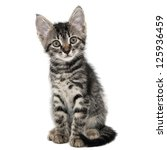 gray striped kitten with a surprised grimace isolated white - stock photo