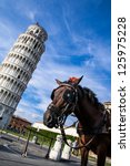 Pisa Horse - stock photo